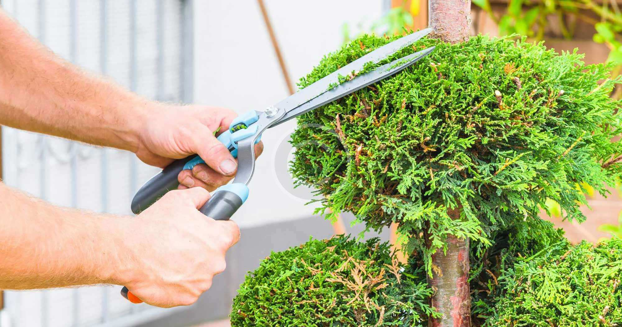Contact Us-Myrtle Beach Tree Trimming and Stump Grinding Services-We Offer Tree Trimming Services, Tree Removal, Tree Pruning, Tree Cutting, Residential and Commercial Tree Trimming Services, Storm Damage, Emergency Tree Removal, Land Clearing, Tree Companies, Tree Care Service, Stump Grinding, and we're the Best Tree Trimming Company Near You Guaranteed!
