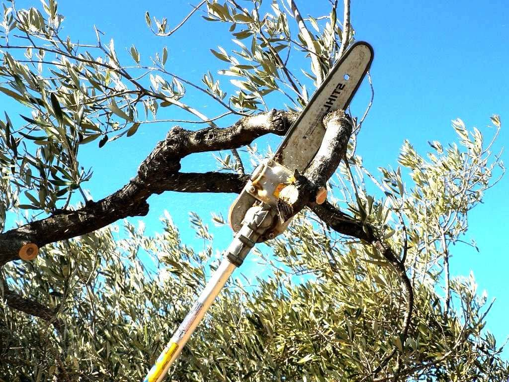 Myrtle Beach Tree Trimming and Stump Grinding Services Home Page Image-We Offer Tree Trimming Services, Tree Removal, Tree Pruning, Tree Cutting, Residential and Commercial Tree Trimming Services, Storm Damage, Emergency Tree Removal, Land Clearing, Tree Companies, Tree Care Service, Stump Grinding, and we're the Best Tree Trimming Company Near You Guaranteed!