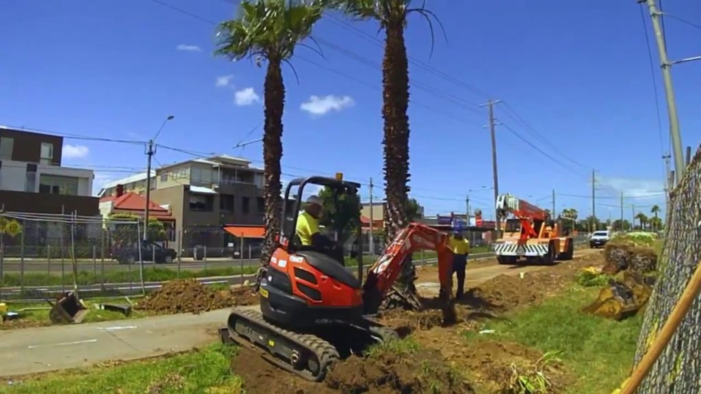 Palm tree removal-Myrtle Beach Tree Trimming and Stump Grinding Services-We Offer Tree Trimming Services, Tree Removal, Tree Pruning, Tree Cutting, Residential and Commercial Tree Trimming Services, Storm Damage, Emergency Tree Removal, Land Clearing, Tree Companies, Tree Care Service, Stump Grinding, and we're the Best Tree Trimming Company Near You Guaranteed!