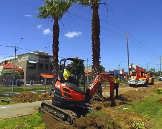 Palm Tree Trimming and Removal-Myrtle Beach Tree Trimming and Stump Grinding Services-We Offer Tree Trimming Services, Tree Removal, Tree Pruning, Tree Cutting, Residential and Commercial Tree Trimming Services, Storm Damage, Emergency Tree Removal, Land Clearing, Tree Companies, Tree Care Service, Stump Grinding, and we're the Best Tree Trimming Company Near You Guaranteed!