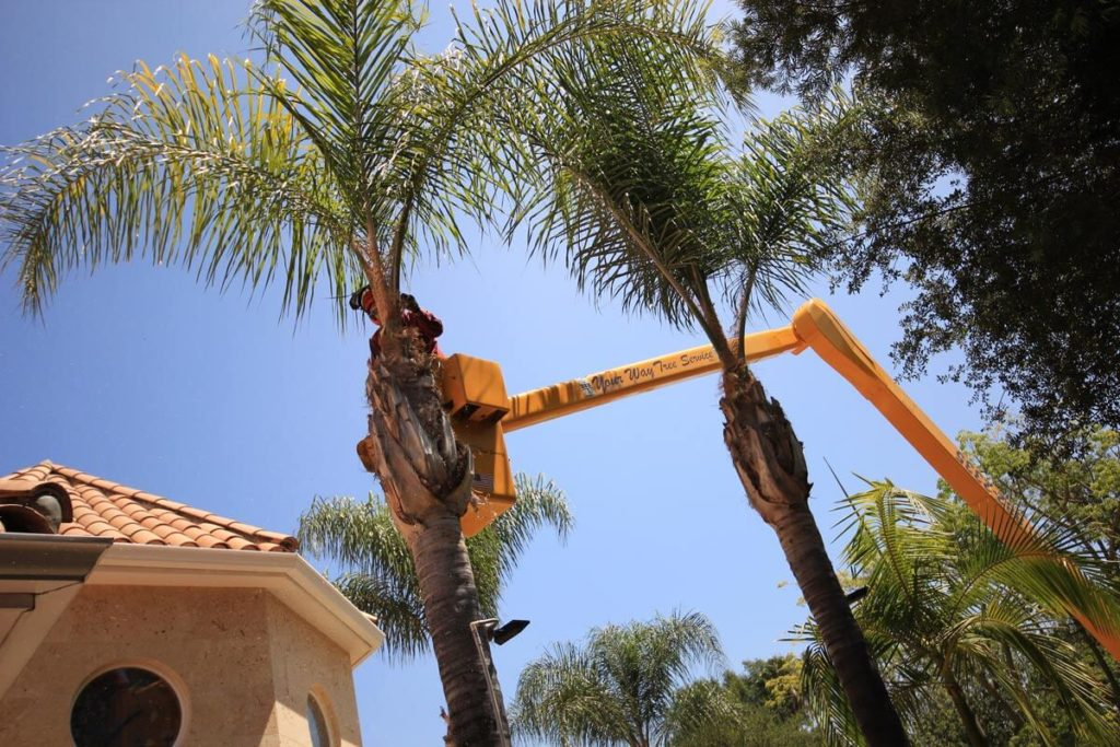 Palm tree trimming-Myrtle Beach Tree Trimming and Stump Grinding Services-We Offer Tree Trimming Services, Tree Removal, Tree Pruning, Tree Cutting, Residential and Commercial Tree Trimming Services, Storm Damage, Emergency Tree Removal, Land Clearing, Tree Companies, Tree Care Service, Stump Grinding, and we're the Best Tree Trimming Company Near You Guaranteed!