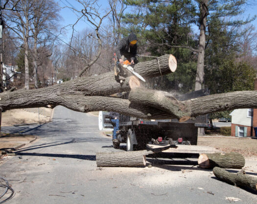 Residential tree services-Myrtle Beach Tree Trimming and Stump Grinding Services-We Offer Tree Trimming Services, Tree Removal, Tree Pruning, Tree Cutting, Residential and Commercial Tree Trimming Services, Storm Damage, Emergency Tree Removal, Land Clearing, Tree Companies, Tree Care Service, Stump Grinding, and we're the Best Tree Trimming Company Near You Guaranteed!