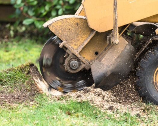 Stump grinding-Myrtle Beach Tree Trimming and Stump Grinding Services-We Offer Tree Trimming Services, Tree Removal, Tree Pruning, Tree Cutting, Residential and Commercial Tree Trimming Services, Storm Damage, Emergency Tree Removal, Land Clearing, Tree Companies, Tree Care Service, Stump Grinding, and we're the Best Tree Trimming Company Near You Guaranteed!