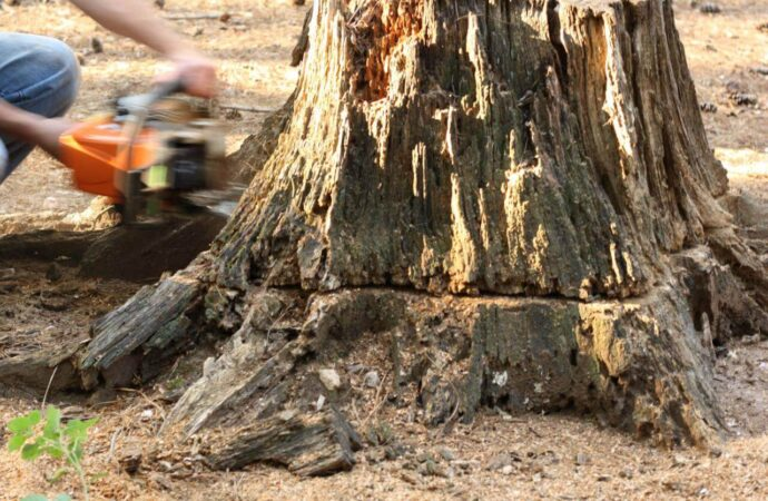 Stump removal-Myrtle Beach Tree Trimming and Stump Grinding Services-We Offer Tree Trimming Services, Tree Removal, Tree Pruning, Tree Cutting, Residential and Commercial Tree Trimming Services, Storm Damage, Emergency Tree Removal, Land Clearing, Tree Companies, Tree Care Service, Stump Grinding, and we're the Best Tree Trimming Company Near You Guaranteed!