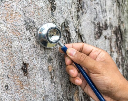 Tree assessments-Myrtle Beach Tree Trimming and Stump Grinding Services-We Offer Tree Trimming Services, Tree Removal, Tree Pruning, Tree Cutting, Residential and Commercial Tree Trimming Services, Storm Damage, Emergency Tree Removal, Land Clearing, Tree Companies, Tree Care Service, Stump Grinding, and we're the Best Tree Trimming Company Near You Guaranteed!