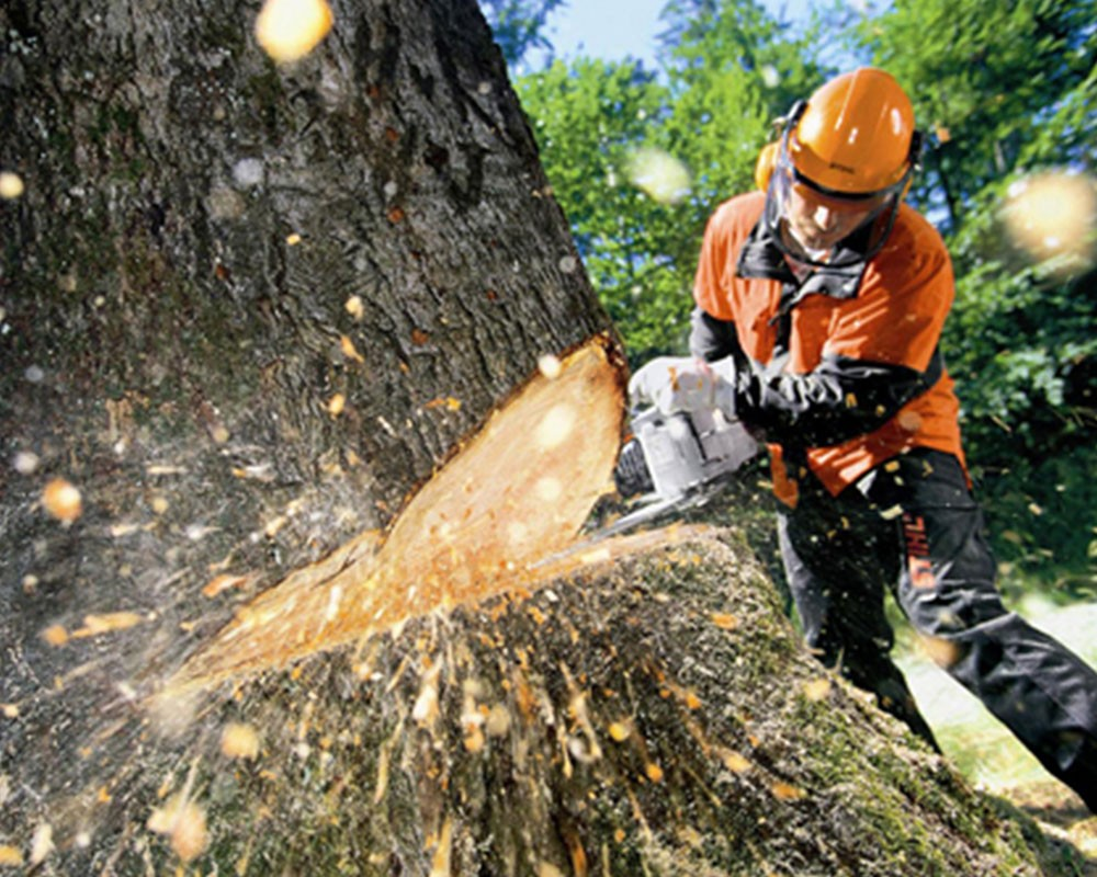 Tree cutting-Myrtle Beach Tree Trimming and Stump Grinding Services-We Offer Tree Trimming Services, Tree Removal, Tree Pruning, Tree Cutting, Residential and Commercial Tree Trimming Services, Storm Damage, Emergency Tree Removal, Land Clearing, Tree Companies, Tree Care Service, Stump Grinding, and we're the Best Tree Trimming Company Near You Guaranteed!