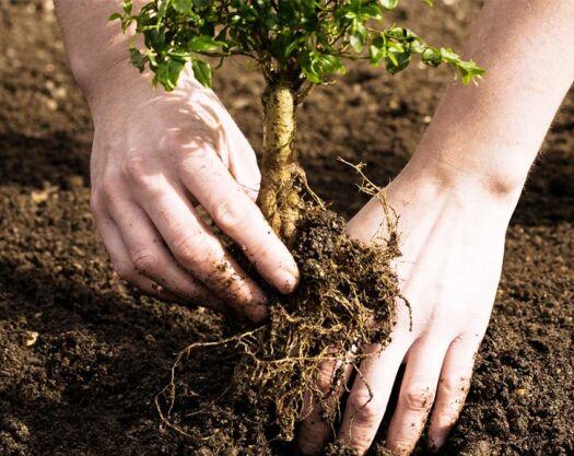 Tree planting-Myrtle Beach Tree Trimming and Stump Grinding Services-We Offer Tree Trimming Services, Tree Removal, Tree Pruning, Tree Cutting, Residential and Commercial Tree Trimming Services, Storm Damage, Emergency Tree Removal, Land Clearing, Tree Companies, Tree Care Service, Stump Grinding, and we're the Best Tree Trimming Company Near You Guaranteed!