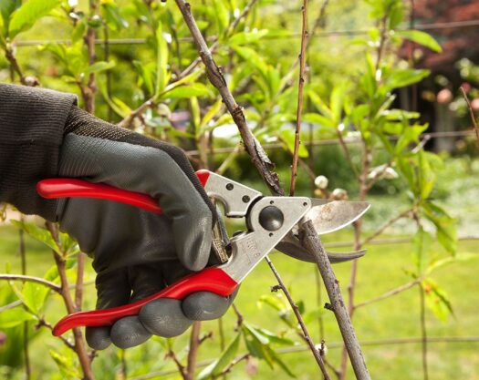 Tree pruning-Myrtle Beach Tree Trimming and Stump Grinding Services-We Offer Tree Trimming Services, Tree Removal, Tree Pruning, Tree Cutting, Residential and Commercial Tree Trimming Services, Storm Damage, Emergency Tree Removal, Land Clearing, Tree Companies, Tree Care Service, Stump Grinding, and we're the Best Tree Trimming Company Near You Guaranteed!