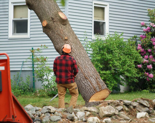 Tree removal-Myrtle Beach Tree Trimming and Stump Grinding Services-We Offer Tree Trimming Services, Tree Removal, Tree Pruning, Tree Cutting, Residential and Commercial Tree Trimming Services, Storm Damage, Emergency Tree Removal, Land Clearing, Tree Companies, Tree Care Service, Stump Grinding, and we're the Best Tree Trimming Company Near You Guaranteed!