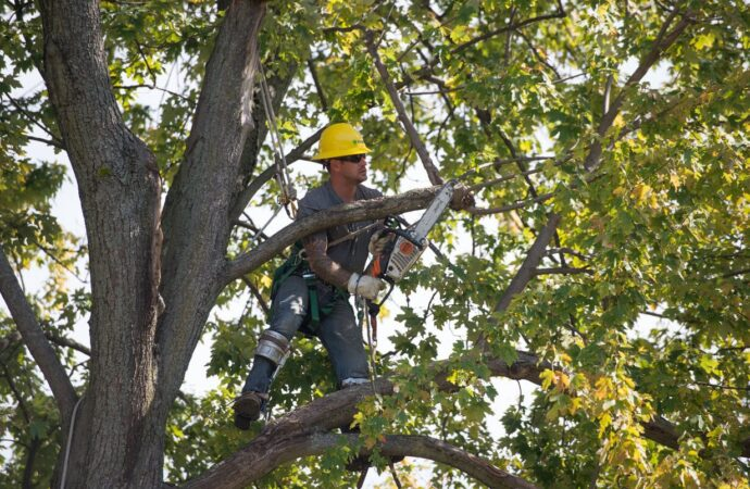Tree trimming-Myrtle Beach Tree Trimming and Stump Grinding Services-We Offer Tree Trimming Services, Tree Removal, Tree Pruning, Tree Cutting, Residential and Commercial Tree Trimming Services, Storm Damage, Emergency Tree Removal, Land Clearing, Tree Companies, Tree Care Service, Stump Grinding, and we're the Best Tree Trimming Company Near You Guaranteed!