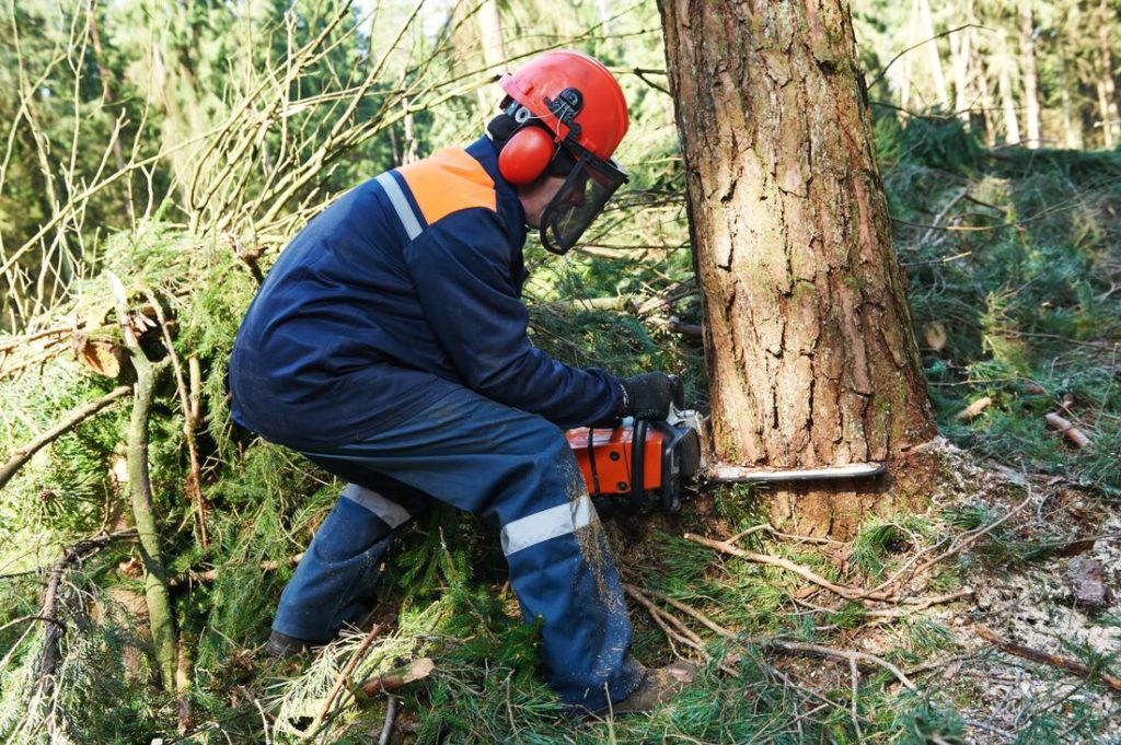 Conway-Myrtle Beach Tree Trimming and Stump Grinding Services-We Offer Tree Trimming Services, Tree Removal, Tree Pruning, Tree Cutting, Residential and Commercial Tree Trimming Services, Storm Damage, Emergency Tree Removal, Land Clearing, Tree Companies, Tree Care Service, Stump Grinding, and we're the Best Tree Trimming Company Near You Guaranteed!