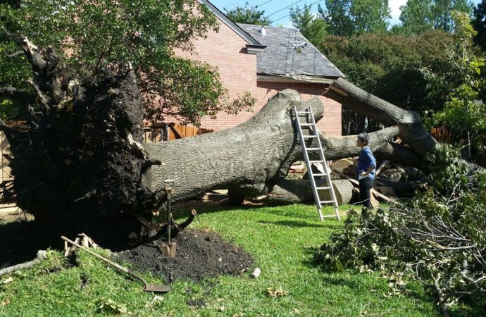 Socastee-Myrtle Beach Tree Trimming and Stump Grinding Services-We Offer Tree Trimming Services, Tree Removal, Tree Pruning, Tree Cutting, Residential and Commercial Tree Trimming Services, Storm Damage, Emergency Tree Removal, Land Clearing, Tree Companies, Tree Care Service, Stump Grinding, and we're the Best Tree Trimming Company Near You Guaranteed!
